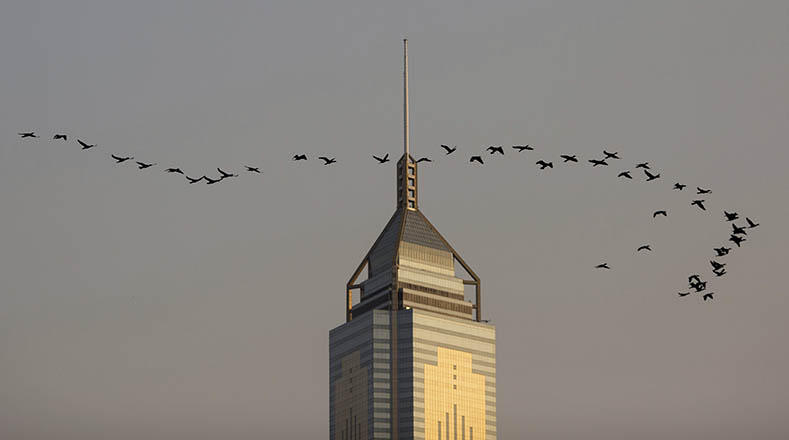 Día mundial de las aves migratorias, viajeras sin fronteras