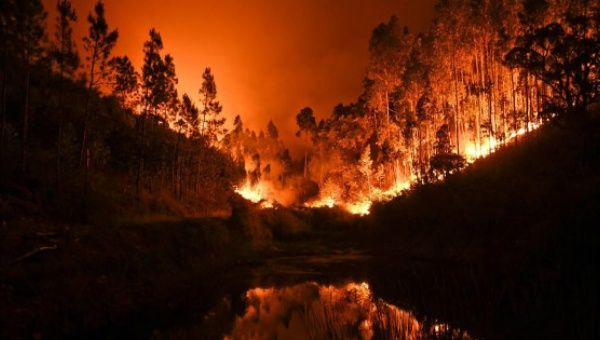 Portugal in mourning as dozens killed in raging forest fires