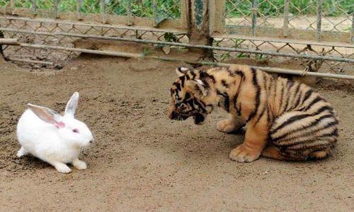 Zoológicos de Dinamarca piden mascotas para alimentar a sus fieras